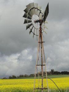 Cái wind milk tận dụng sức gió tự nhiên để lấy nước tưới cho canola