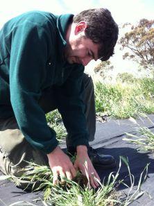 James cật lực nhổ cỏ dại để cứu cây dại. nhổ xong cỏ dại, không thấy cây dại đâu, hé hé